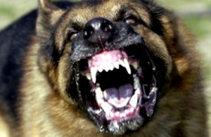 Graphic video shows dog brutally mauled in attack at
