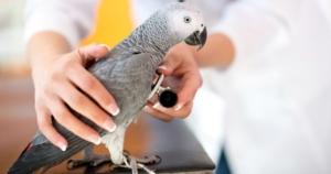 Диагностика состояния птиц