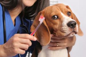 Ветеринар-стоматолог