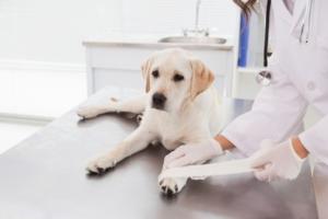 Лабораторная диагностика животных