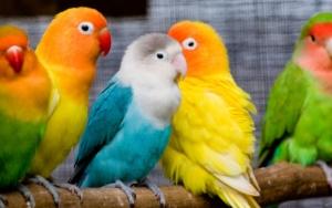 Вакцинация птиц