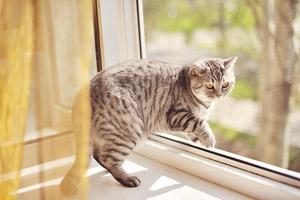 Кошка упала с высоты, что делать
