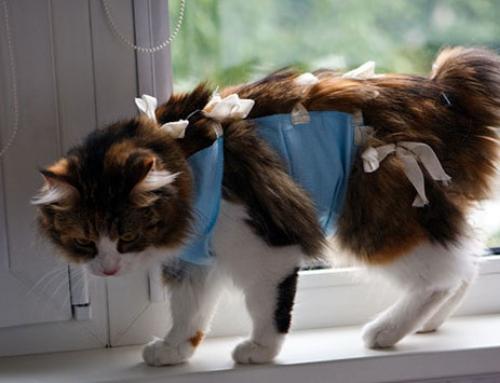 Мастит у кошек