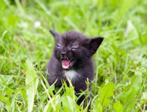 Бешенство у кошек и котов – причины, симптомы, диагностика, лечение и профилактика